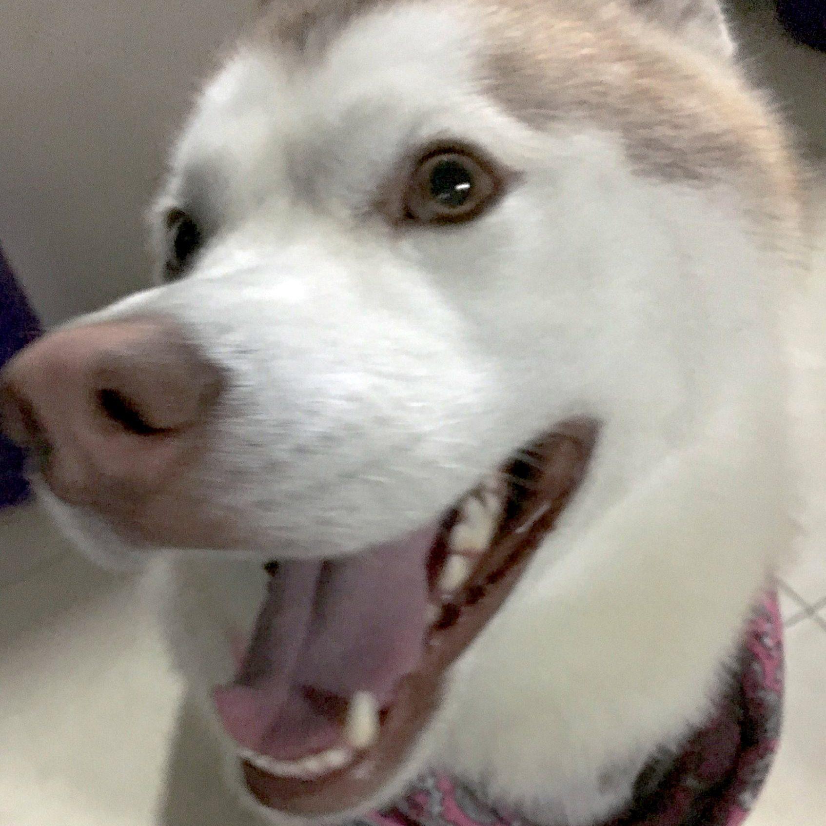 IMG 0002 e1548448281530 - Mi brevísima historia de mi perrito con epilepsia: Blizz