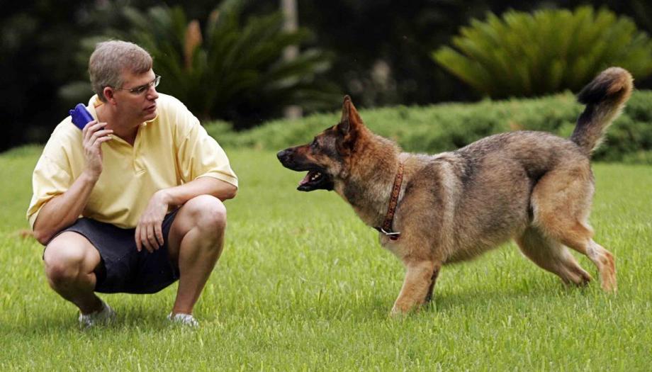 Imagen 4 - 5 comandos principales en el adiestramiento canino