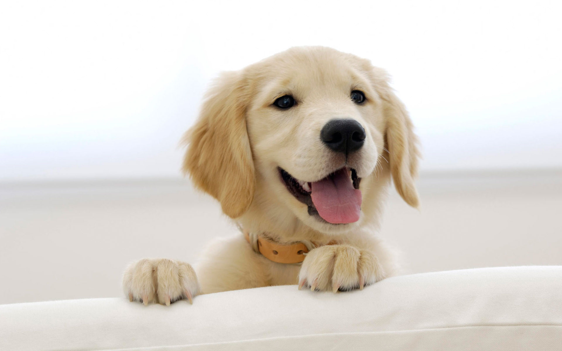 adoptar un perro - Lo que debes saber antes de adoptar un cachorro