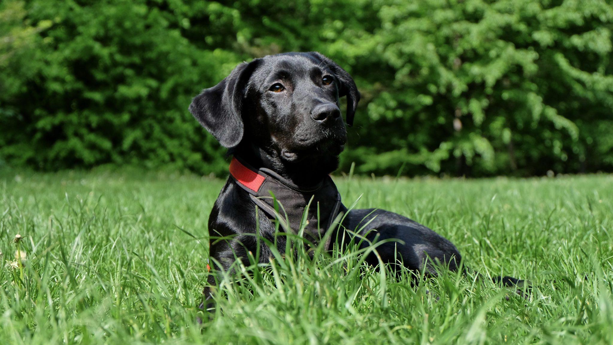 animal black breed 162149 - No todos los perros son iguales, incluso, los de la misma raza