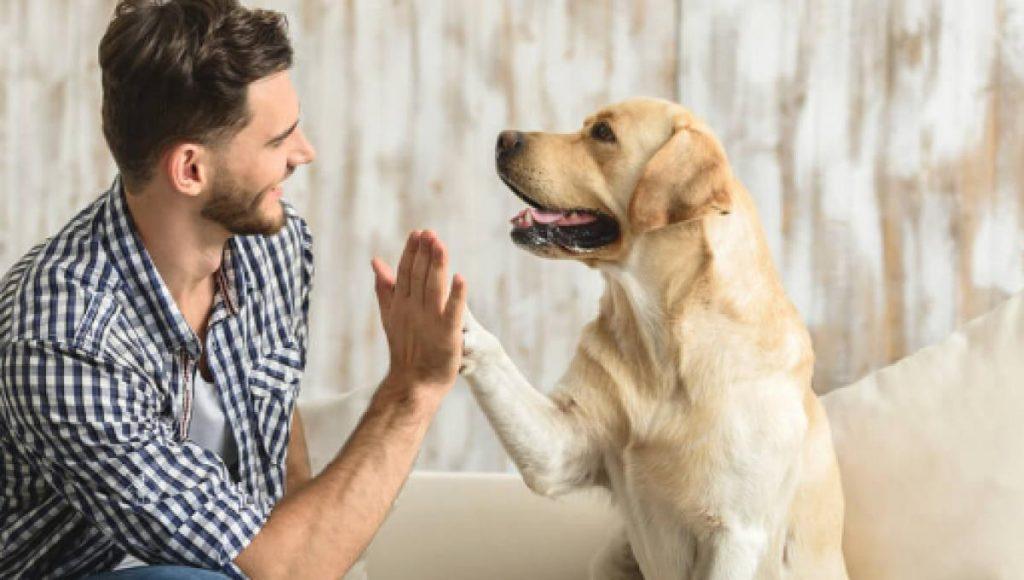 beneficios de mascotas en casa 1024x580 - Beneficios de tener mascotas en casa