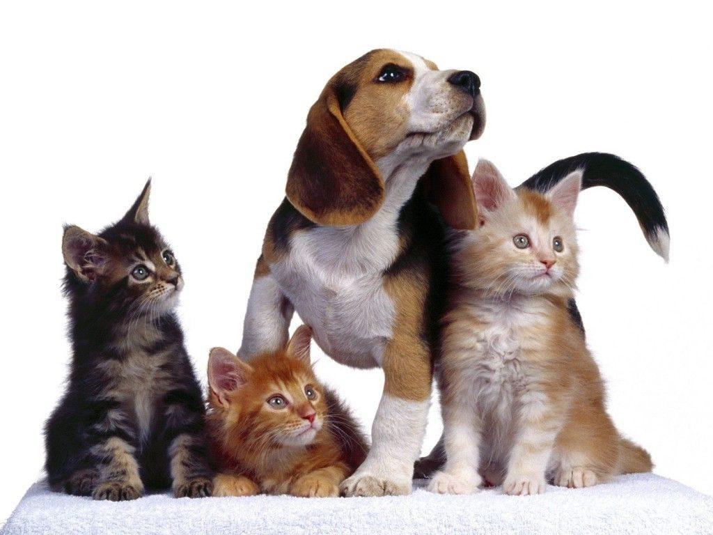 esterilizar mascota 1024x768 - Motivos por los que deberías considerar la esterilización en tus mascotas