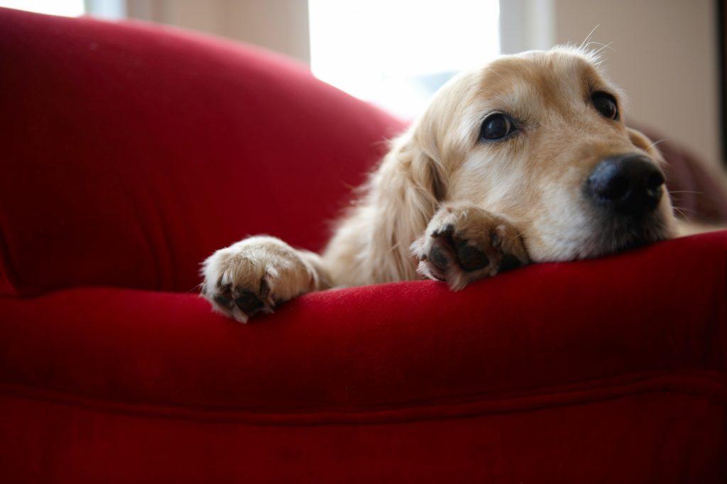mascotas en casa 1024x682 - Beneficios de tener mascotas en casa