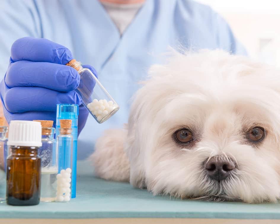 se debe esterilizar a las mascotas - Motivos por los que deberías considerar la esterilización en tus mascotas