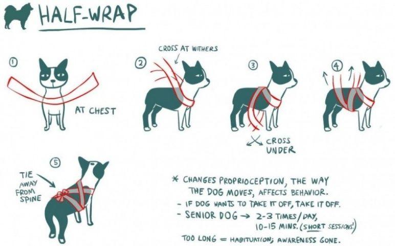 vendaje para perros - ¿Cómo hacer y por qué funciona el vendaje para perros?