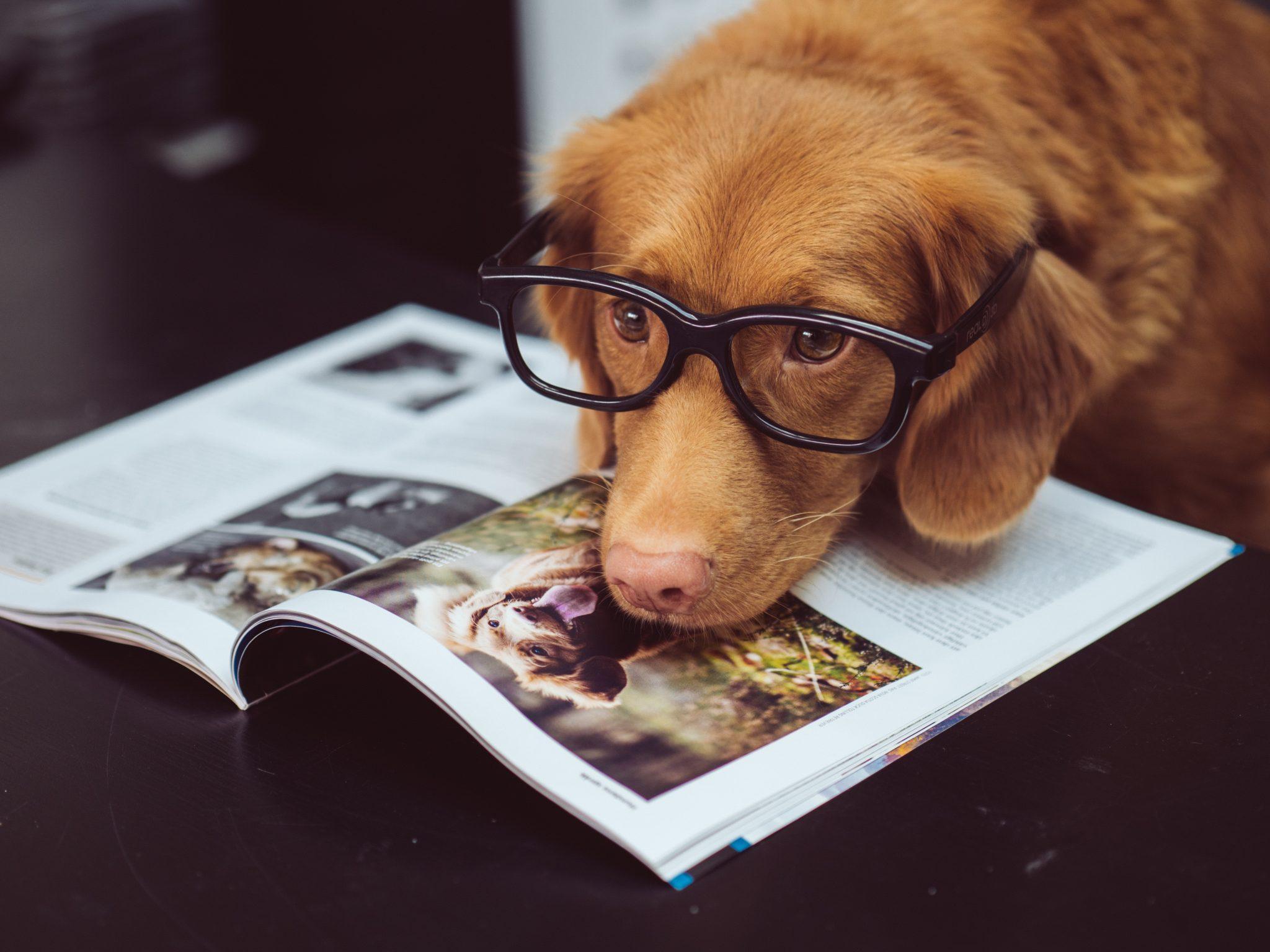 jamie street MoDcnVRN5JU unsplash scaled - ¿Reconoces a estos perros sólo con ver sus orejas?