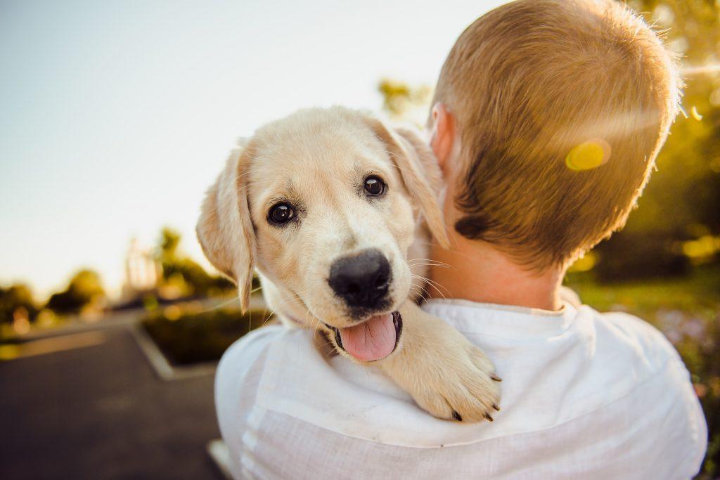 adorable 3344414 1920 1024x683 - 5 signos de que tu mascota es feliz contigo