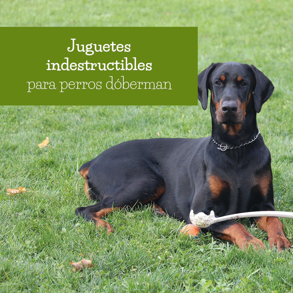juguetes indestructibles para doberman