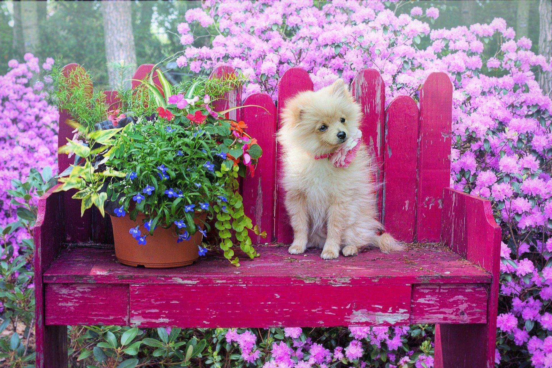 plantas-seguras-para-mascotas
