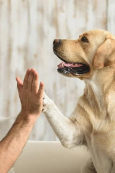 beneficios de mascotas en casa o2w6uoarq0cz2ldxhadsghdme94fp4tcu3vfsidkkw - Home